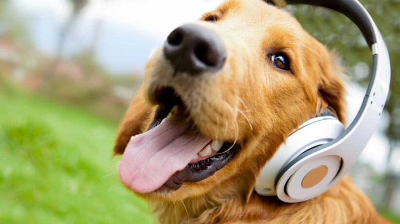 dog listening to music with headphones