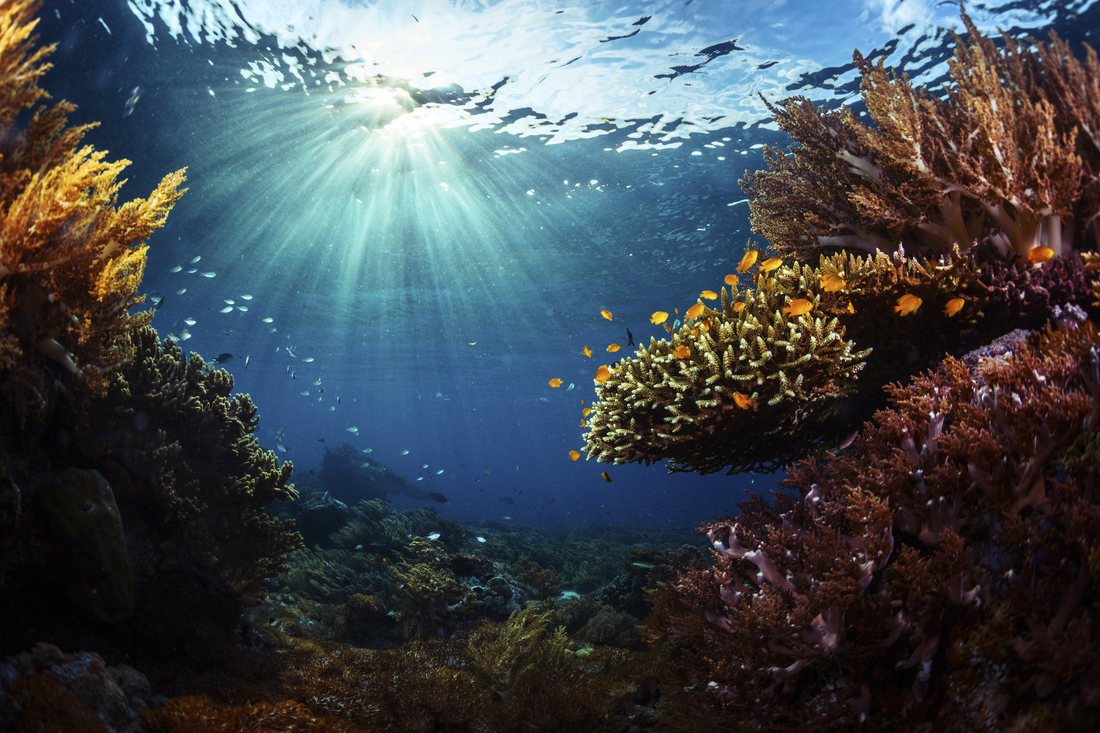 Coral reef in tropical sea - Stock image-scr