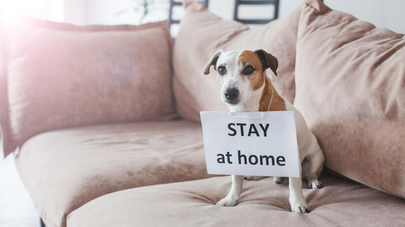 Cute dog at home with blank card. Pet at room during pandemic coronavirus